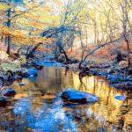 Tres bosques de la Comunidad de Madrid