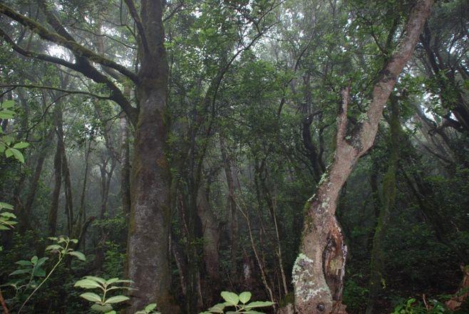 Parque_Nacional_Garajonay